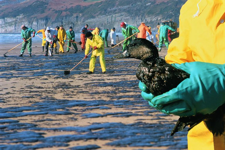 5 Environmental Consequences of Oil Spills