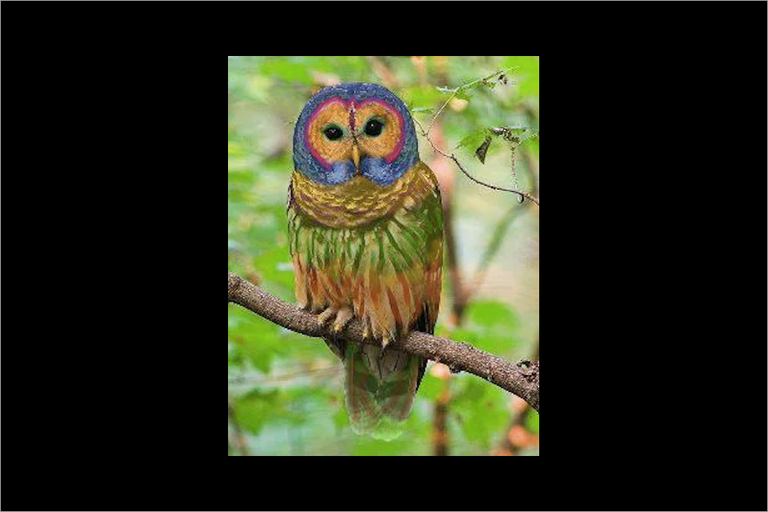 Photo circulating via social media purports to depict the rare rainbow owl, an almost-extinct species native to China and the western U.S.