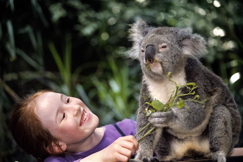 Koala with Girl