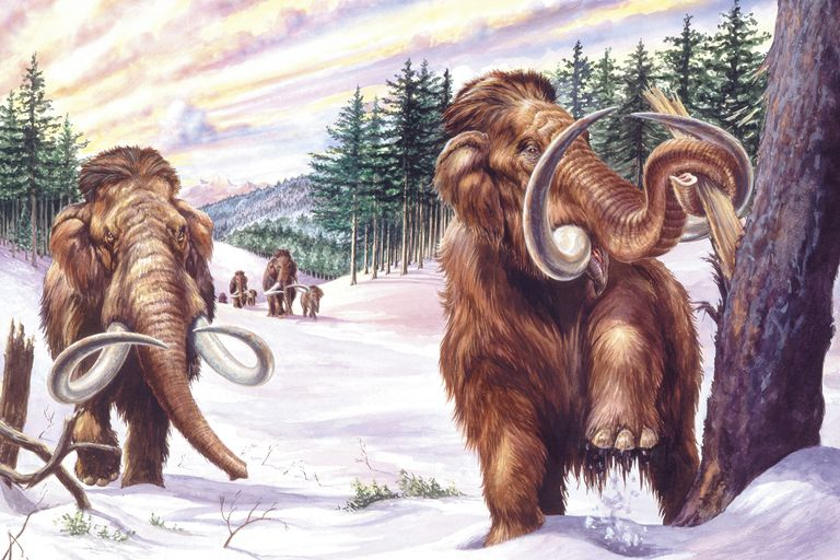 10 Facts About The Wild Woolly Mammoth