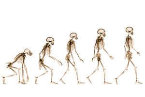 X-rays showing stages of human evolution