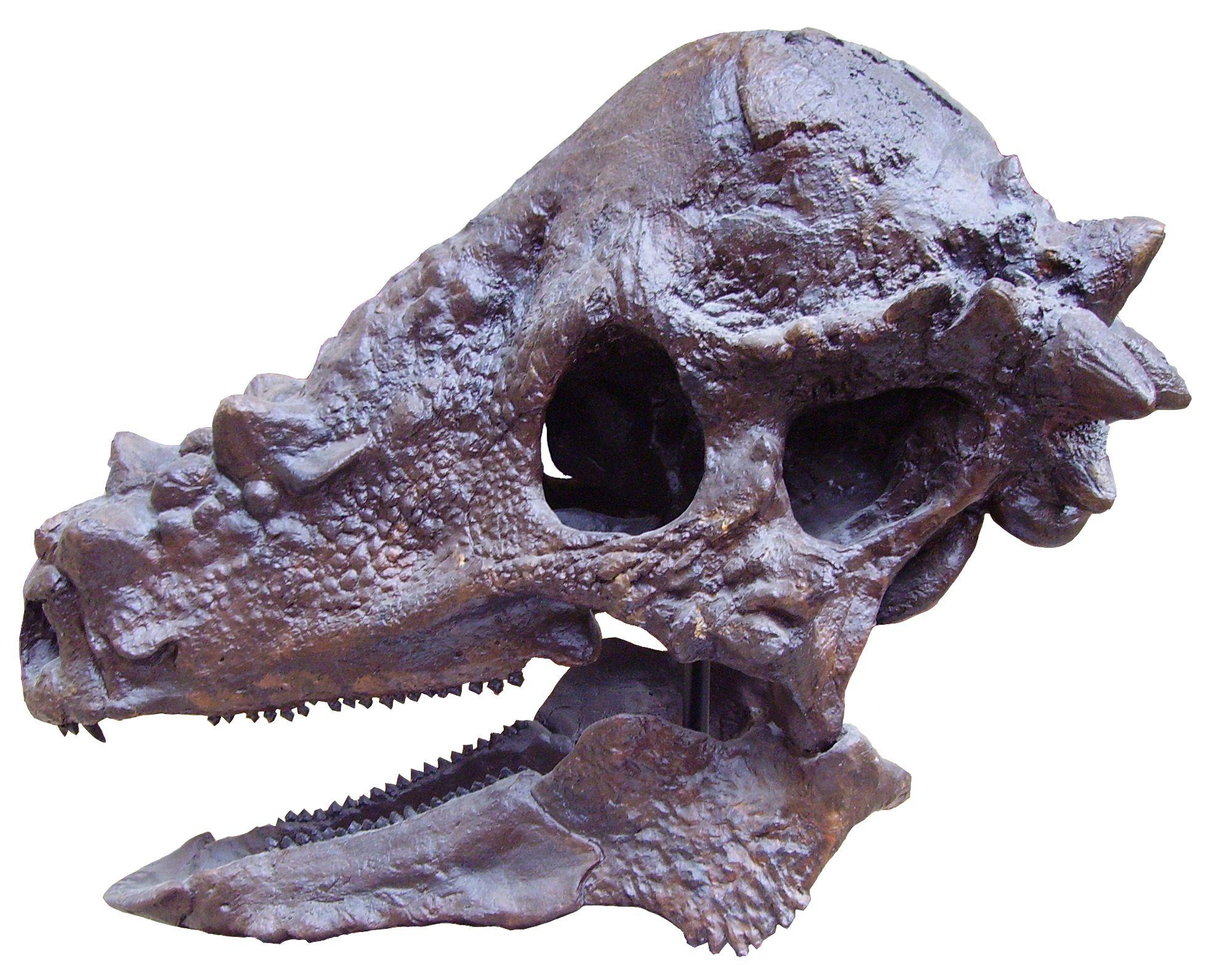 Estos Dinosaurios Herbivoros Eran Verdaderos Knuckleheads Herbívoros con cabeza pequeña y cuello y cola largas. eran verdaderos knuckleheads