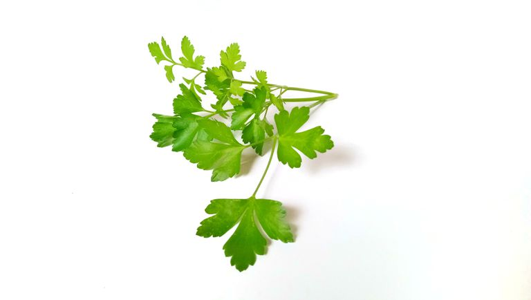 Fresh or dried cilantro adds a tangy citrus flavor to recipes, but some people think it tastes like soap.