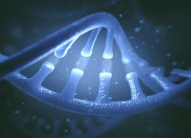DNA is an important nucleic acid.