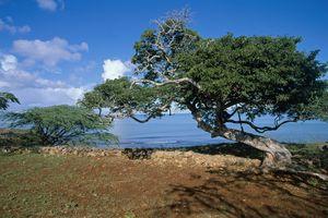 Trees along La Isabela Bay on sunny day.
