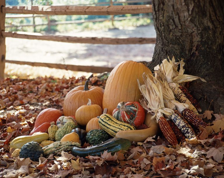 Fall vegetables in leaves