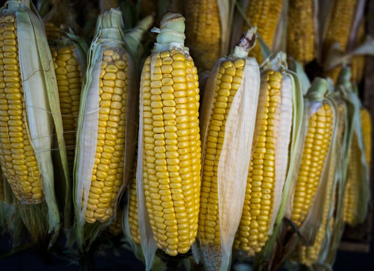 The Anatomy Of Corn