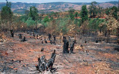 Slash and Burn Agriculture Explanation