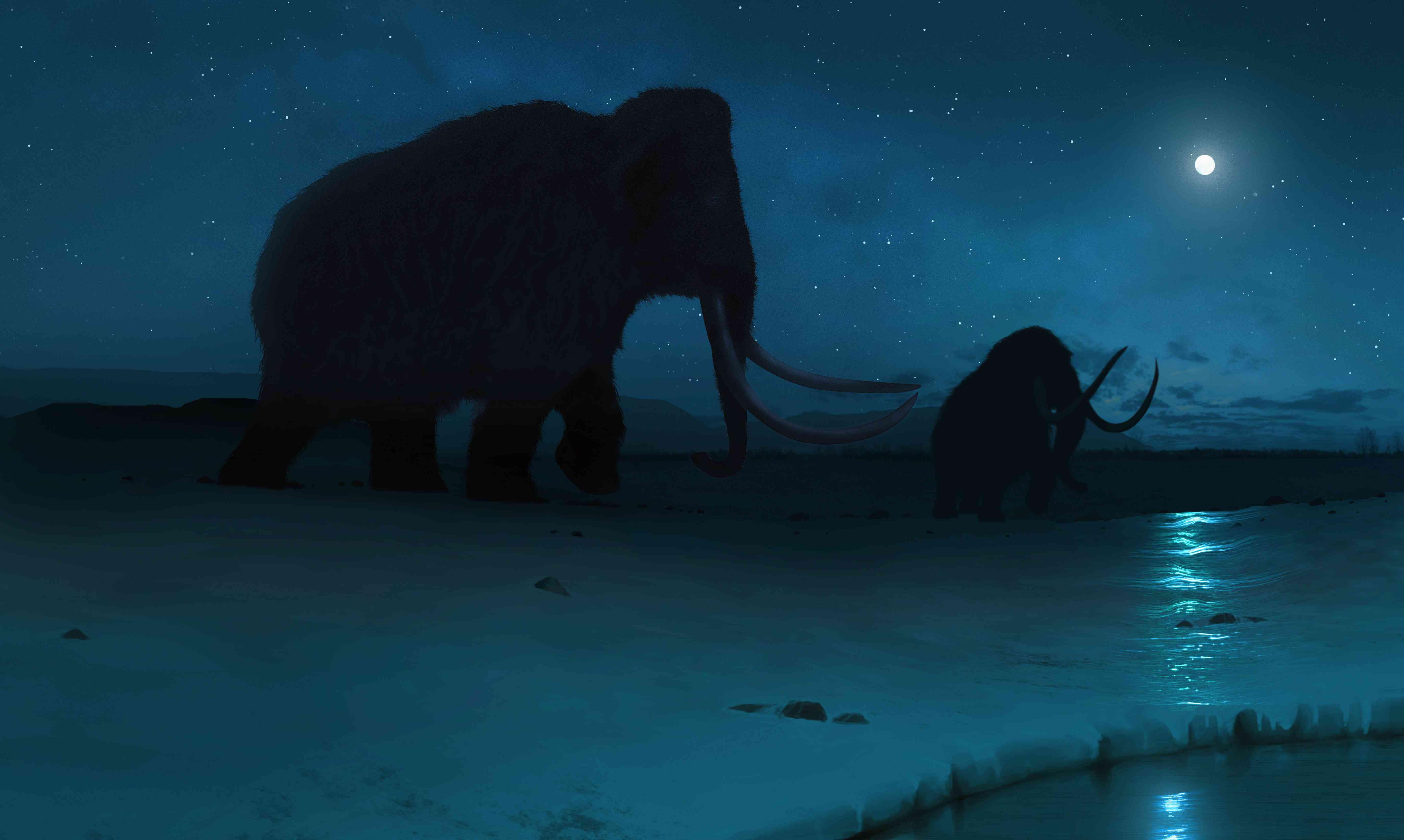 Tundra mammoth, illustration