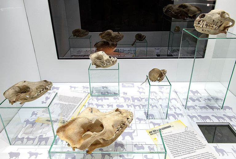 Fossil display showing different ancient animals.