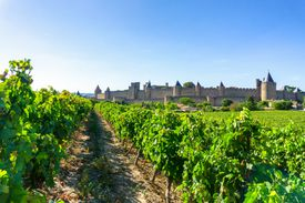 A vineyard in Carcassonne, France