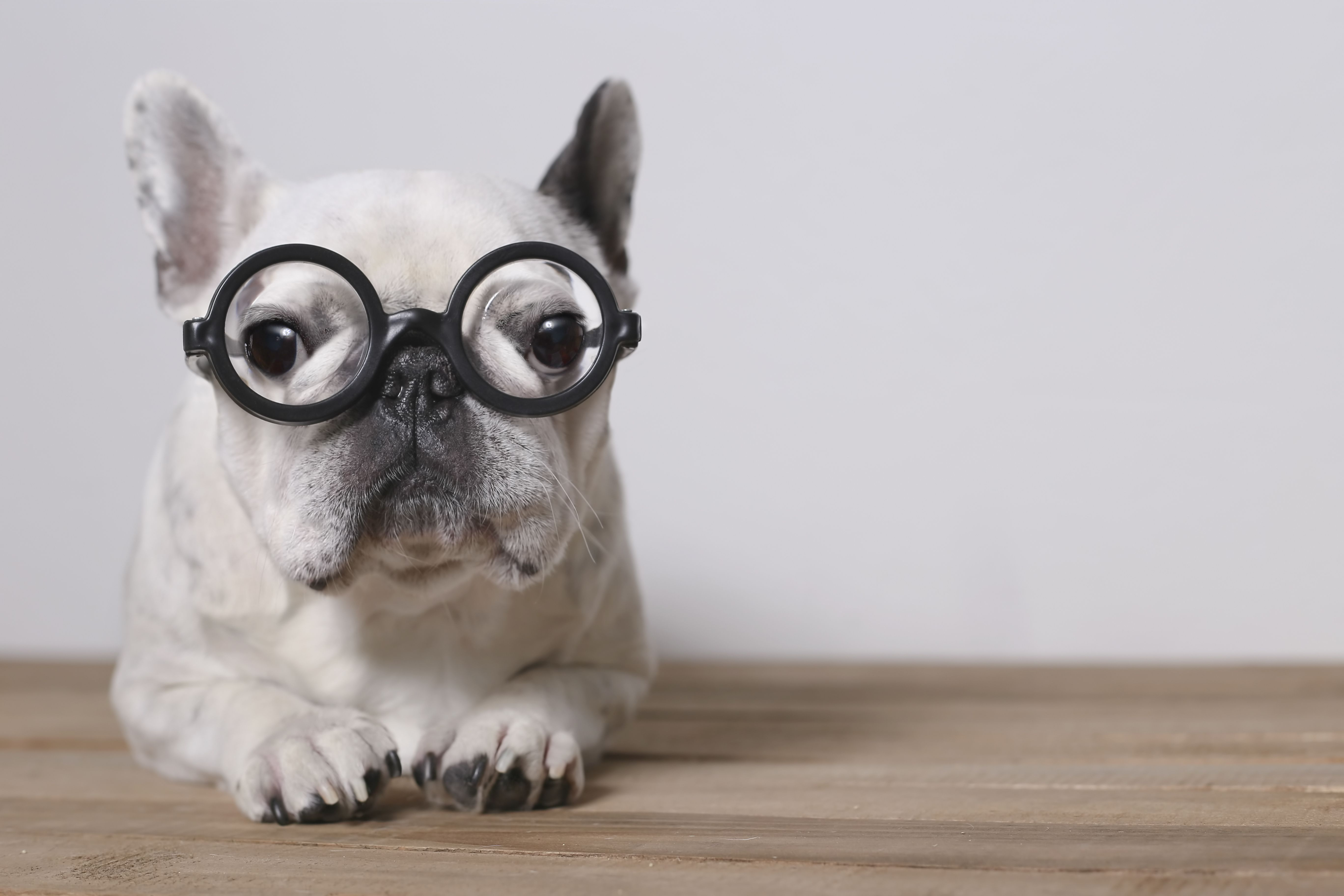 An Introduction to Dog Intelligence and Emotion