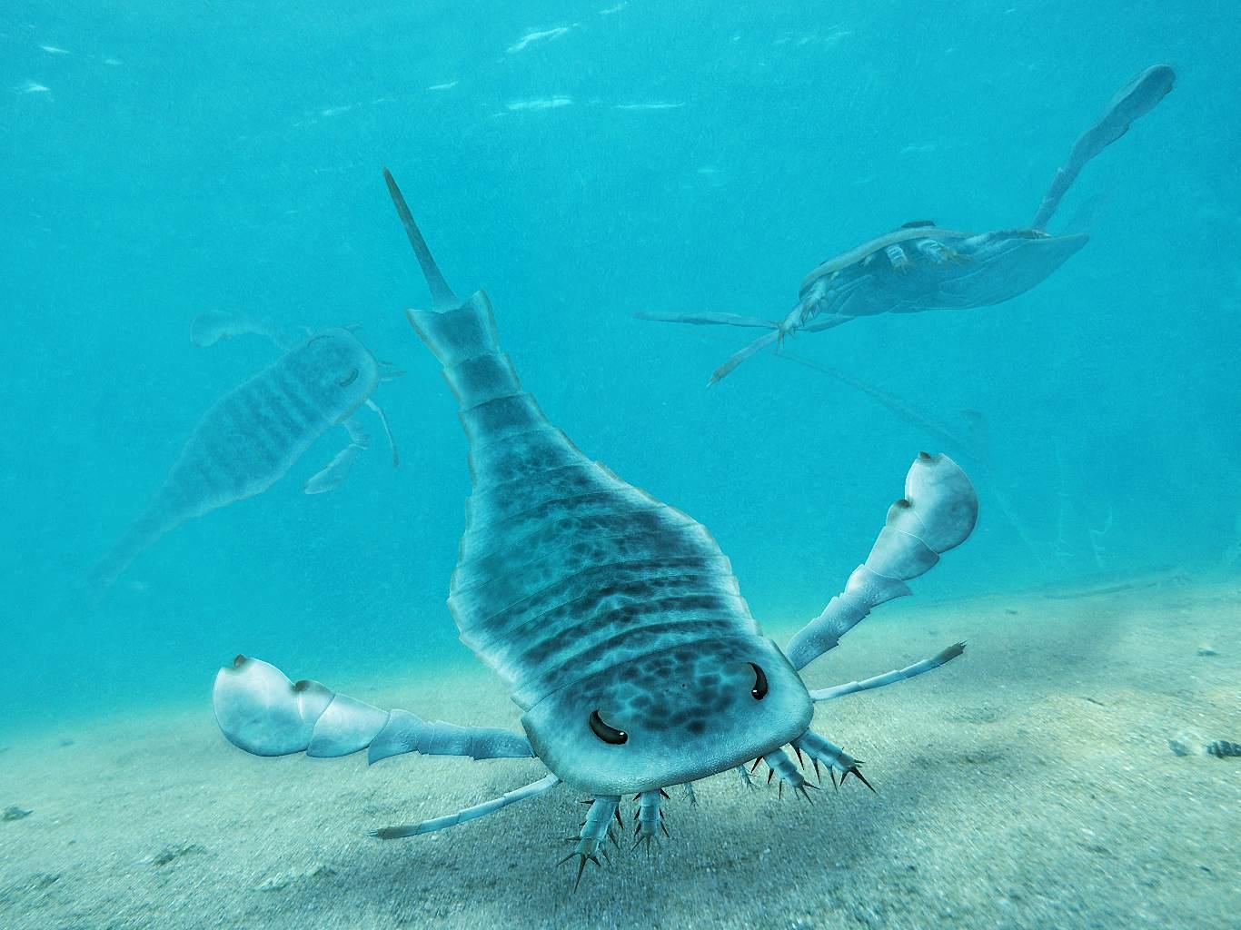 Photo of Eurypterus