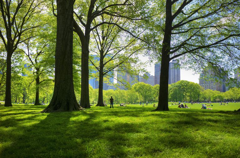 lush green grass, tall trees, people sitting on lawn, skyscrapers in the distance