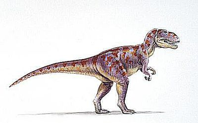 How Was Apatosaurus Discovered?