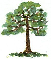Tips on painting realistic trees