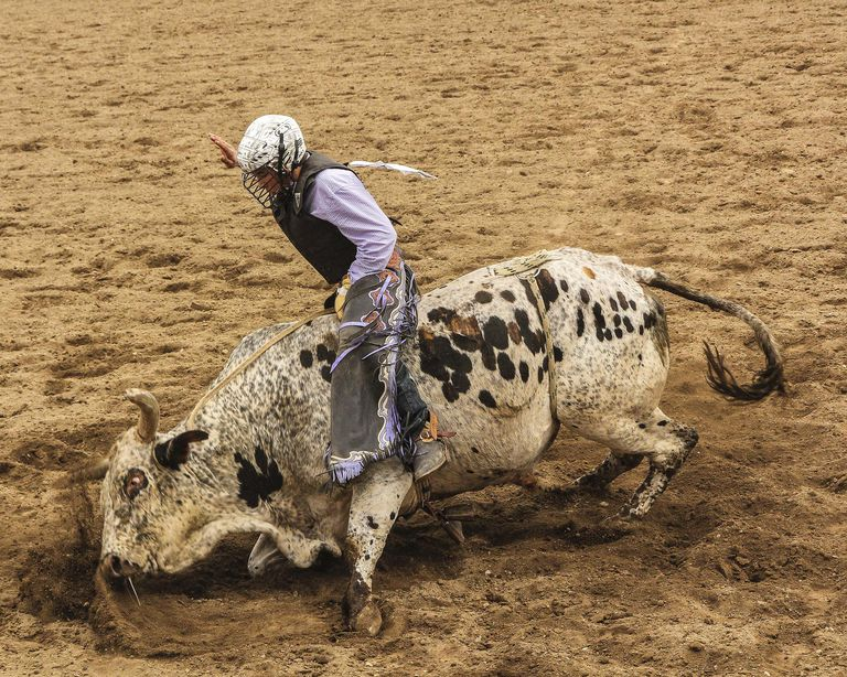 Bull Riding Basics Rodeo S Most Popular Event