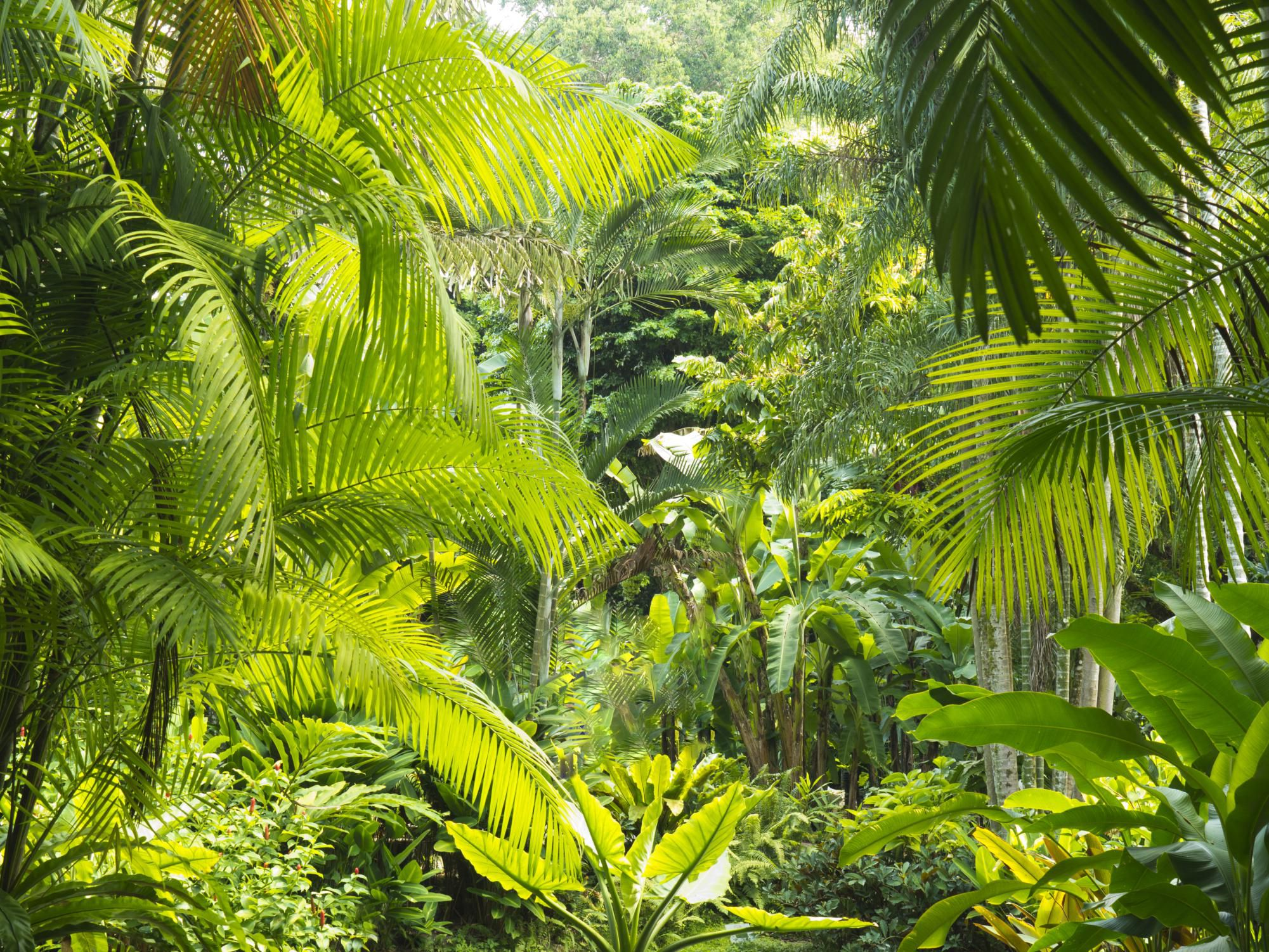Tropical Island Beach Ambience Sound: Malaysian Rainforests Overview