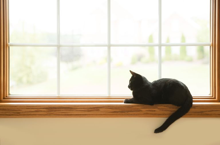 Black cat sitting on windowsill