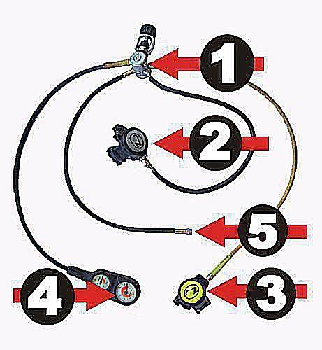 ear hair cell diagram labeled description of scuba diving regulator parts