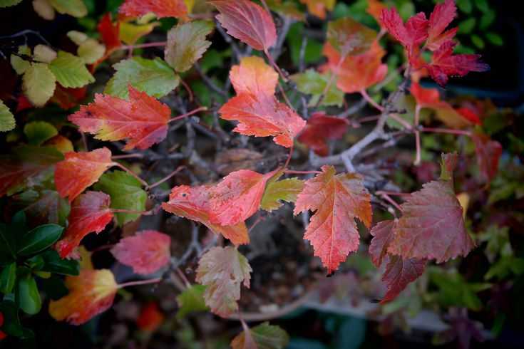 Top 10 Trees For Planting In A Small Yard