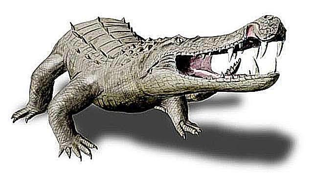 Prehistoric Crocodile Profiles And Pictures