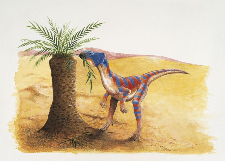 Microceratops dinosaur eating leaves of a tree