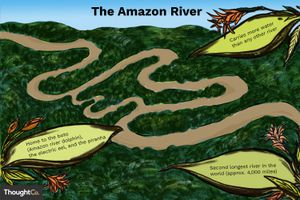 The Amazon River is the second longest river in the world (approximately 4,000 miles)