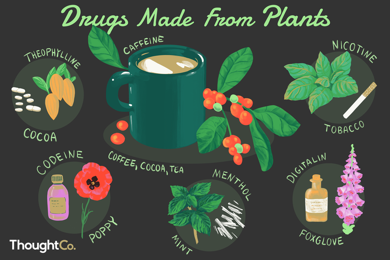 Examples of drugs made from plants. Caffeine (Coffee, Cocoa, Tea), Codeine (Poppy), Digitalin (Foxglove), Menthol (Mint), Nicotine (Tobacco), Theophylline (Cocoa)