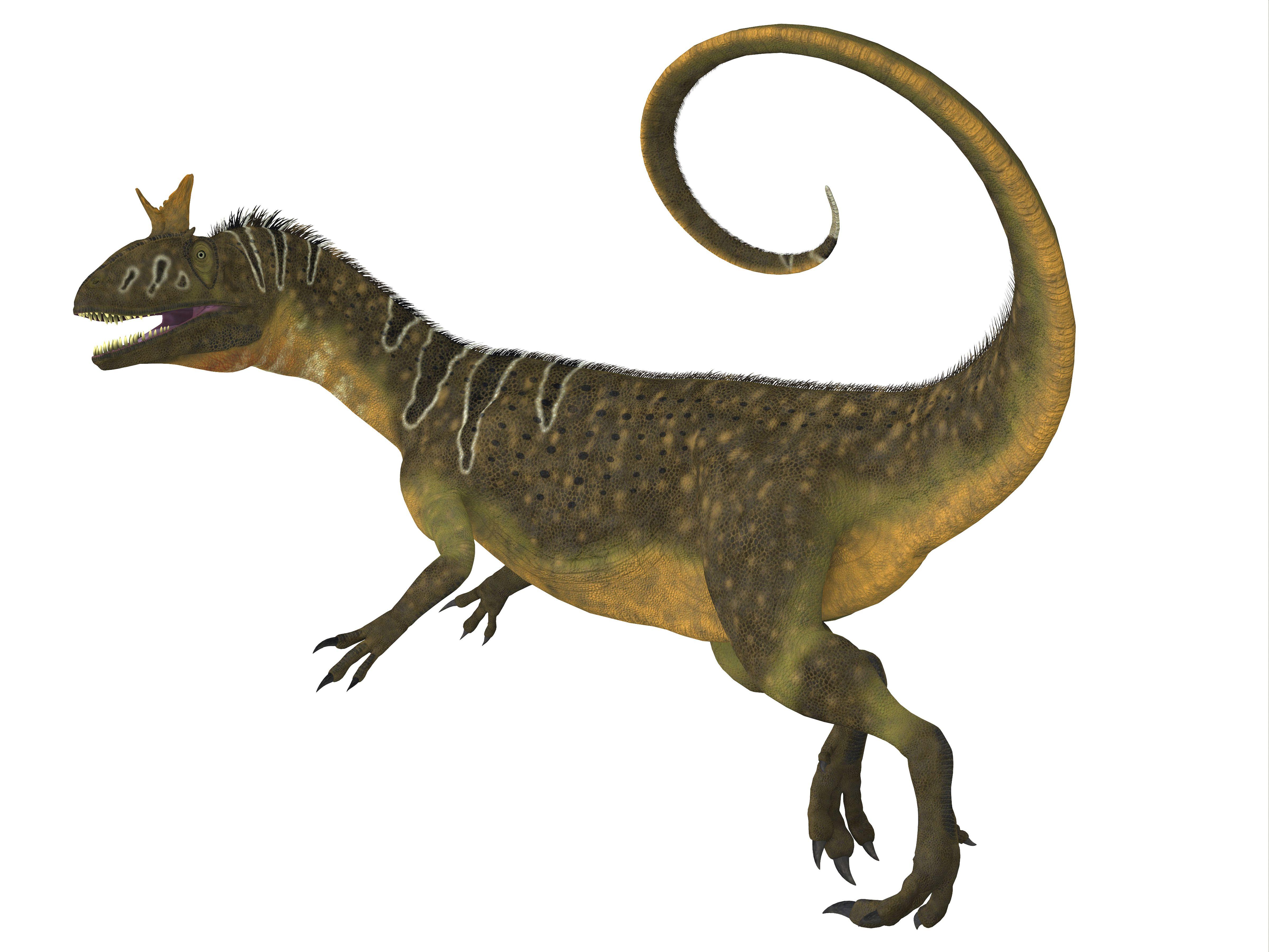 Cryolophosaurus dinosaur, side view.