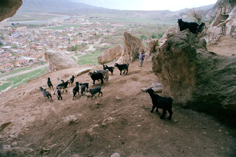 Kurds herding dark goats over rocky outcrops in Turkey