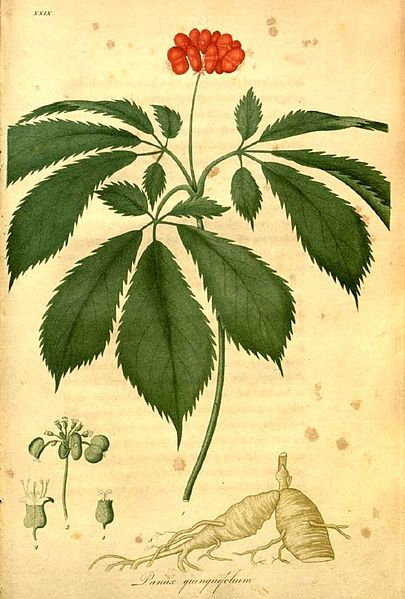 Identifying The Age Of An American Ginseng Plant