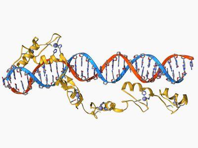 4 steps of transcription