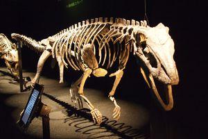 sillosuchus skeleton