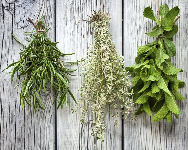 Harvesting drying and storing magical herbs izmirmasajfo