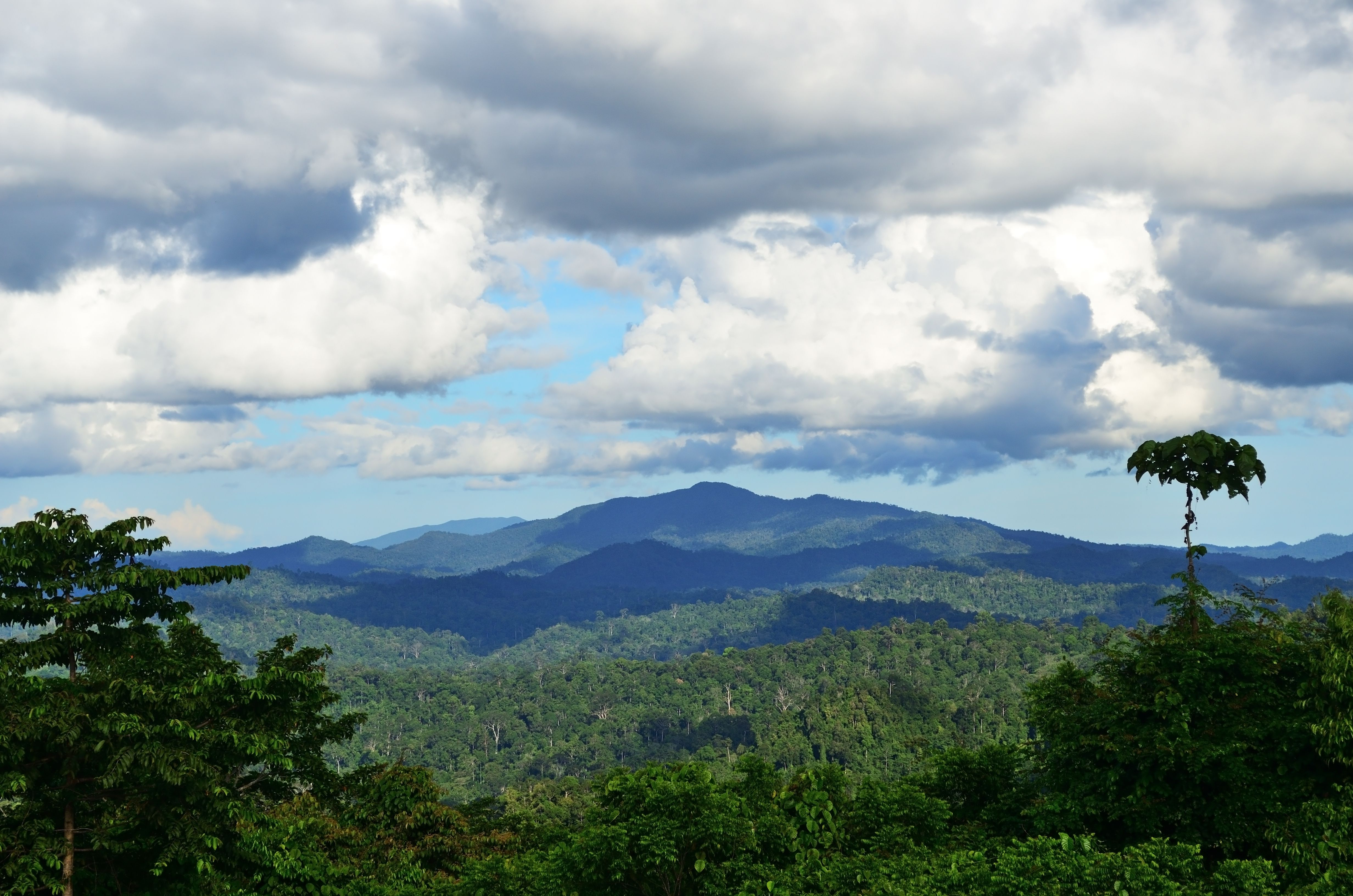 Primary rain forest in Borneo