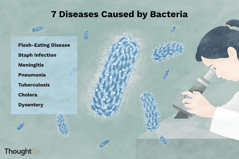 ¿Qué causan las bacterias?