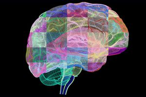 Computer artwork of human brain in profile