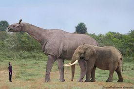 Indricotherium, compared to a human being and an elephant
