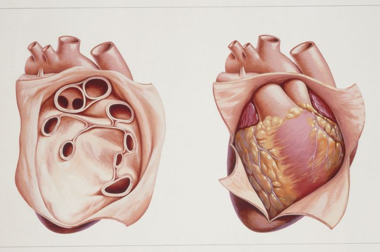 Pericardium Anatomy And Function