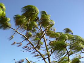 wind in trees