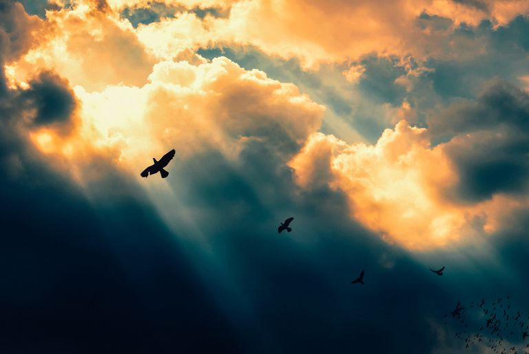 Birds flying to the light