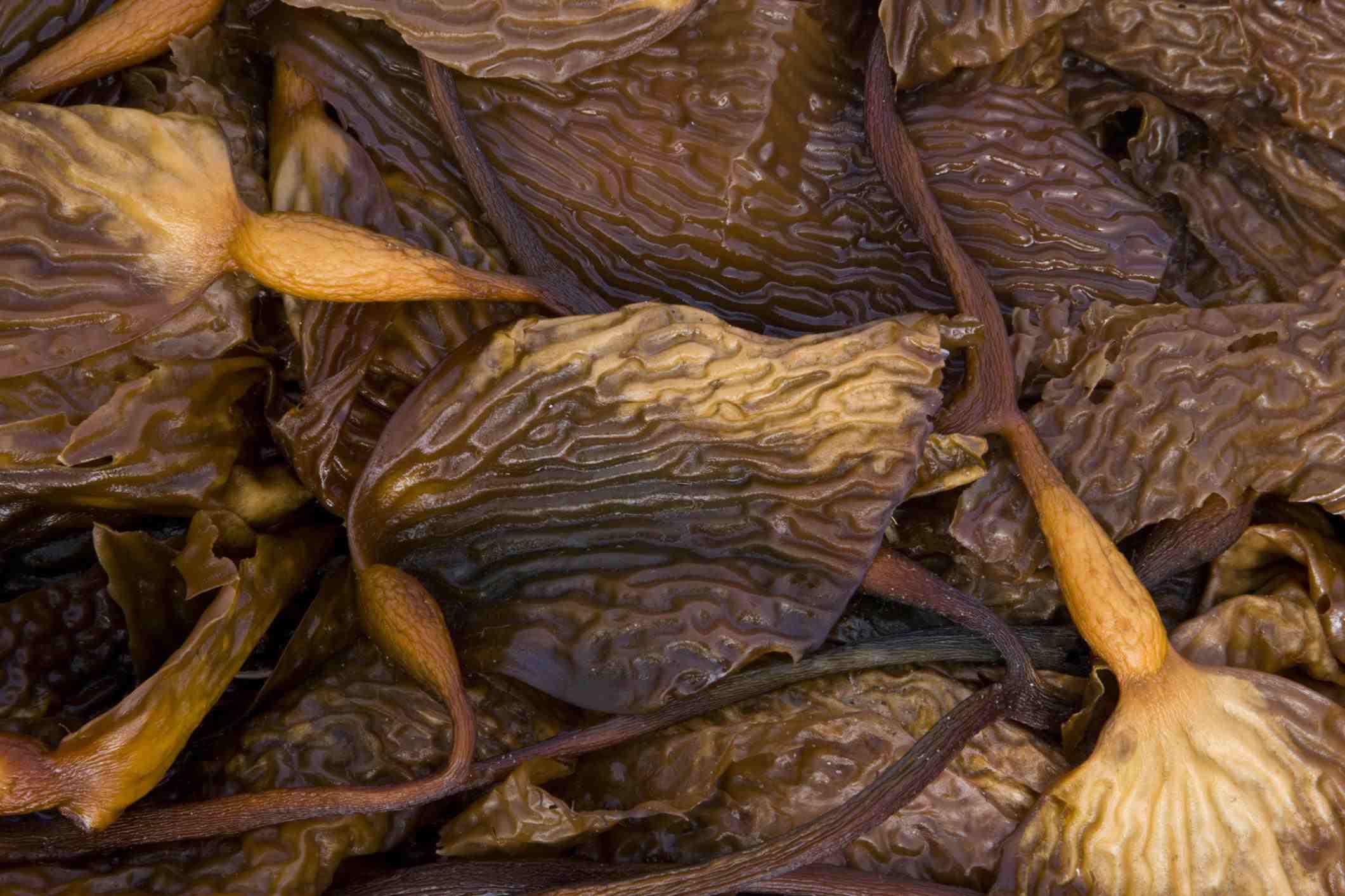 Kelp washed ashore