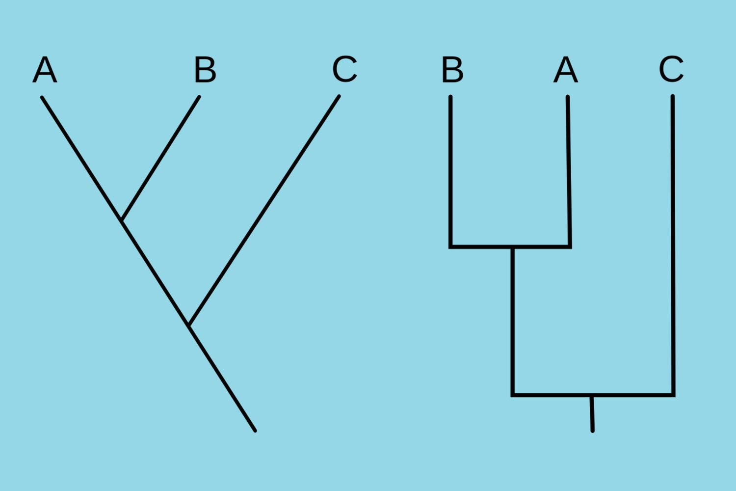 Two identical cladograms