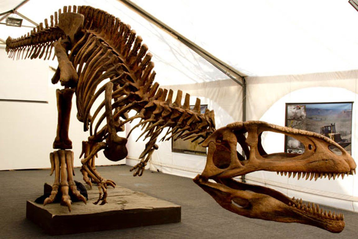 Tyrannotitan skeleton on display