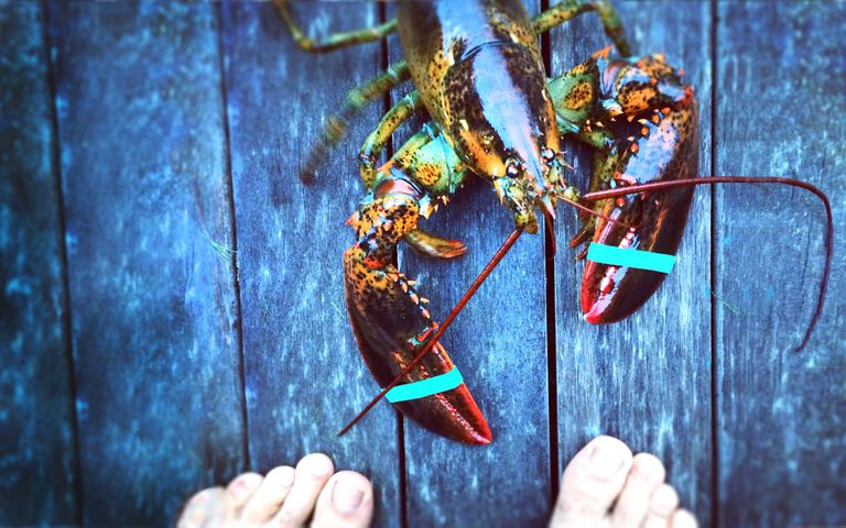 man confronting lobster