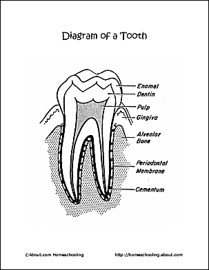 Dental health word search printables ccuart Choice Image