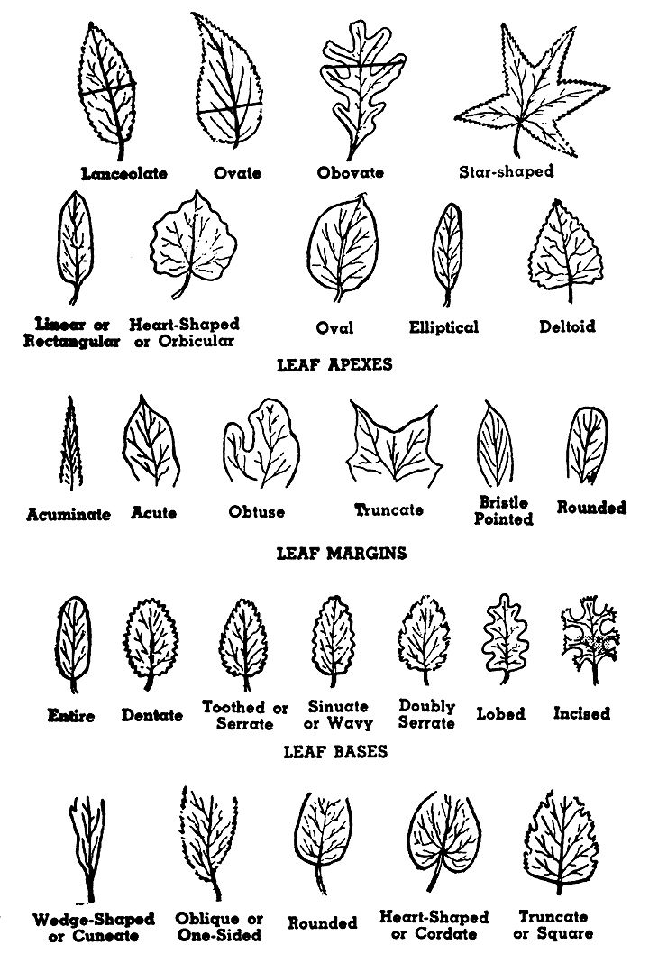 Straight Line Tattoo Artist Uk : Use tree parts to identify a