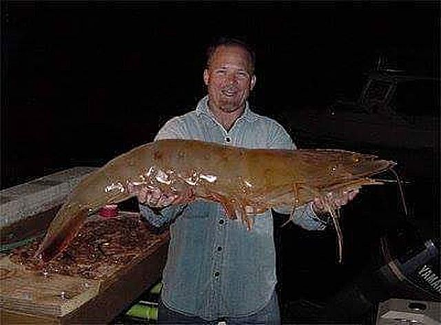 109 Pound Shrimp Found in Florida