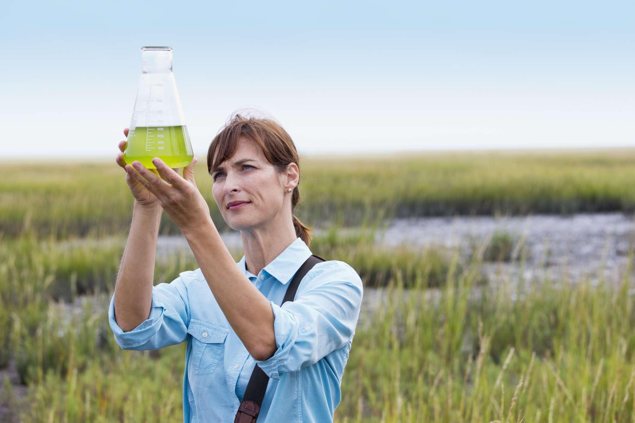 Scientist examining algae